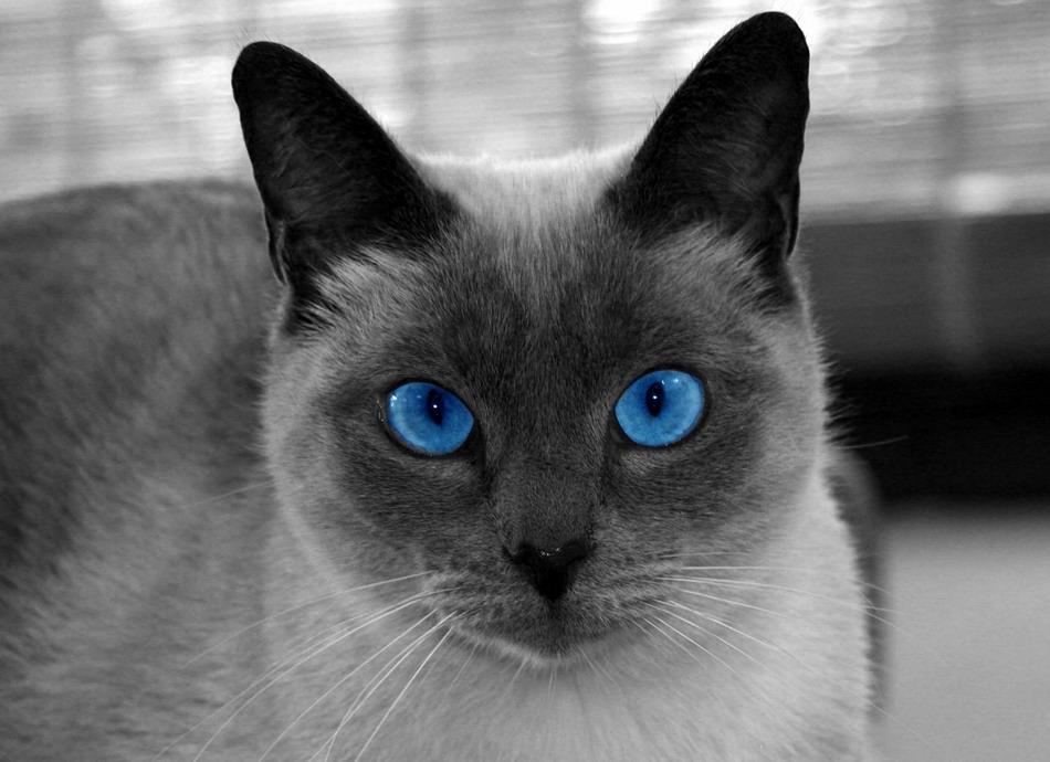5-cat-jpg