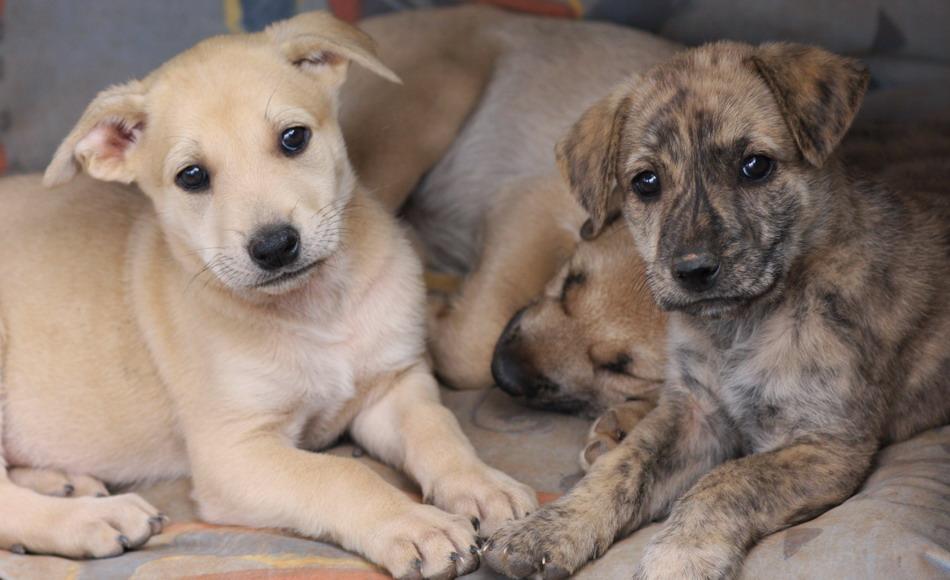 8-puppy-jpg