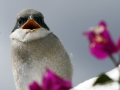 2-bird-jpg