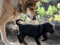 3-dog-lead-jpg