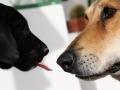 6-dog-lick-jpg