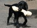 7-dog-bone-jpg